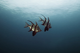 Couple of Fish Fotografie-Druck von underwater graphics