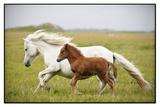 Running Horses.... Fotografisk tryk af Gigja Einarsdottir