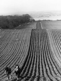 Straight Furrows Reproduction photographique par Hulton Collection