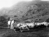 Horseback Shepherdess Reproduction photographique par Hulton Collection