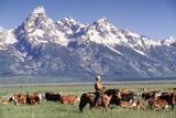 Cowboy Tending Cattle on Ranch, WY Lámina fotográfica por David White
