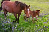 Horse on Bluebonnet Trail Fotografie-Druck von David Hensley