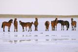 Salt and Horses Fotografisk trykk av Elmar Akhmetov