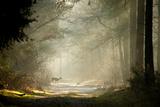 Hjort Fotoprint av  dewollewei