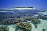 Australia, Queensland, Great Barrier Reef, Heron Island, Fringing Reef Fotografie-Druck von TED MEAD