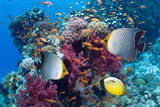 Coral Reef Scenery with Fish Fotografisk tryk af Georgette Douwma