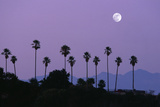 Moon over Palm Trees at Dusk, Hollywood, Los Angeles, California, USA Fotografisk tryk af Grant Faint