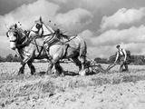 Ploughing Competition Lámina fotográfica por Harry Todd