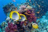 Coral Reef Scenery with Fish Reproduction photographique Premium par Georgette Douwma