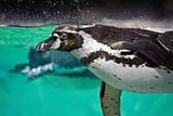 Freestyle Swimming Fotografie-Druck von Ellen Van Bodegom