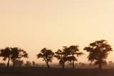 Countryside at Dusk near to Djenne, Mali Fotografisk trykk av Cultura Travel/Philip Lee Harvey