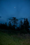 Moon and Trees Photographic Print by Aaron McCoy