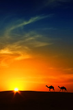 Silhouette of Camels at Sunset,Saudi Arabia Fotografie-Druck von I hope you like my photos