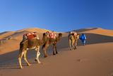 Tuareg Camel Train, Sahara Desert, Morocco Impressão fotográfica por Peter Adams