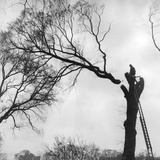 Branch Felling Reproduction photographique par Bob Aylott