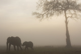 African Elephant Mother and Baby at Dawn Fotografisk tryk af Anup Shah