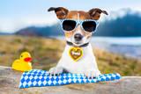 Oktoberfest Dog Reproduction photographique par Javier Brosch