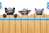 Bavarian Dogs Valokuvavedos tekijänä Javier Brosch