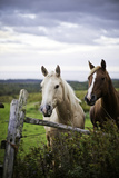 Two Horses Standing near Fence Photographic Print by Bob Stefko