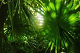 Mexico, Yucatan, Palm Grove Reproduction photographique par Tetra Images