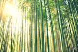 Tall Bamboo Forest Photographic Print by Meredith Winn Photography