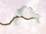 Two Doves Looking at Each Other against Pink Sky Photographic Print by Michael Blann