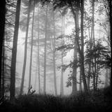 Luxulyan Lost Fotografisk tryk af Photography by Dean Forrest