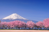 Fuji and Sakura Photographic Print by Peerapat Tandavanitj