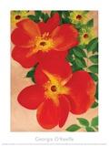 Austrian Copper Rose Poster von Georgia O'Keeffe