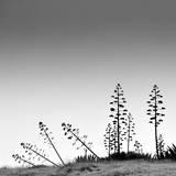 Desert Fotografie-Druck von Pedro Daz Molins
