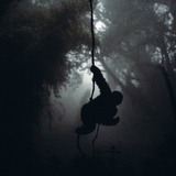 Mountain Gorilla Hanging on Vine Photographic Print by Adrian Warren