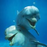 Bottlenose Dolphin Two Facing Camera Lámina fotográfica por Augusto Leandro Stanzani