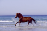 Horse Trotting Through Waves in Sea Fotografisk tryk