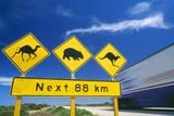 Australien Fotografisk tryk