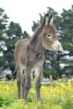 Donkey, Baby 5 Days Old Fotografie-Druck