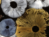 Mushroom Spores Close-Up Lámina fotográfica