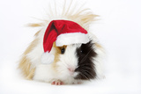 Guinea Pig Wearing Christmas Hat Fotografisk tryk