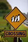 Penguin Crossing Road Sign Fotografisk tryk