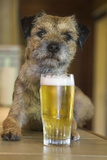 Border Terrier in Pub with Beer Fotografisk tryk