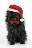 Affenpinscher Wearing Christmas Hat and Bow Tie Lámina fotográfica