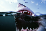 Great White Pointer Shark Fotografie-Druck