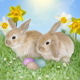 Rabbit with Easter Eggs and Daffodils Photographic Print