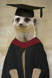 Meerkat in Mortar Board and Gown Fotografisk tryk