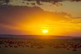 Sunset over Serengeti National Park Fotografisk tryk