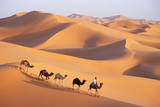 Morocco Camel Train, Berber with Dromedary Camels Fotografisk tryk