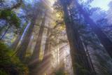 Tree Power, California Coast Fotografisk trykk av Vincent James