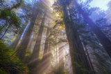 Tree Power, California Coast Photographic Print by Vincent James