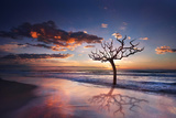 Tree in the Sea Photographic Print by Marco Carmassi