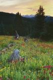 Scenic Alpine Wildflower Meadow Landscape Stampa fotografica di Scott Cramer
