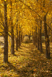 Usa, Colorado, Autumn Tree Lined Footpath Photographic Print by John Kelly